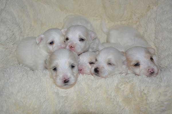choisir un élevage canin