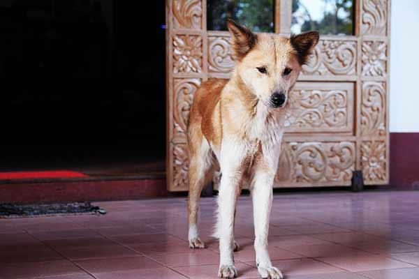 anorexie chez le chien