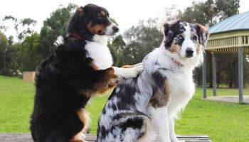 masser son chien