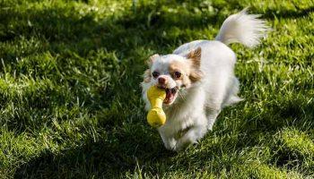 choisir un jouet pour son chien