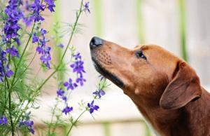 phytotherapie-chien