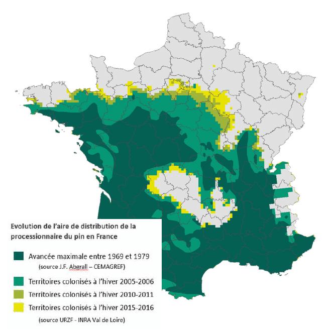 Localisation des chenilles processionnaires du pin en France