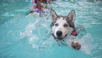hydrothérapie chez le chien