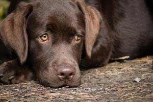 Faire arrêter un chien qui pleure la nuit