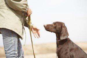 metier-educateur-canin