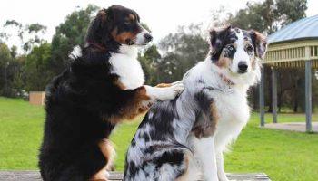 ostéopathie chez le chien