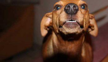Le Dressage De Chien - 10 astuces à connaître - Education du chien - Tutorial