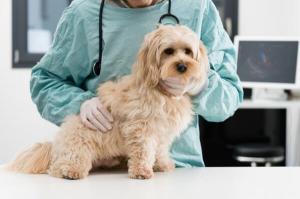 assurance-pour-animaux