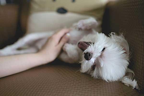 gastro enterite du chien