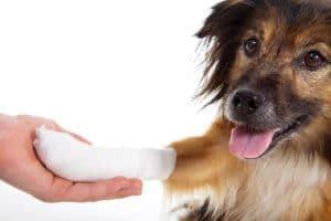 soigner-plaie-chien
