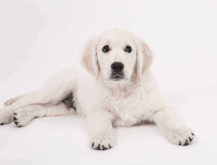 Mon chien ne mange plus : causes et solutions