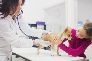 etapes-rembousement-assurance-pour-animaux