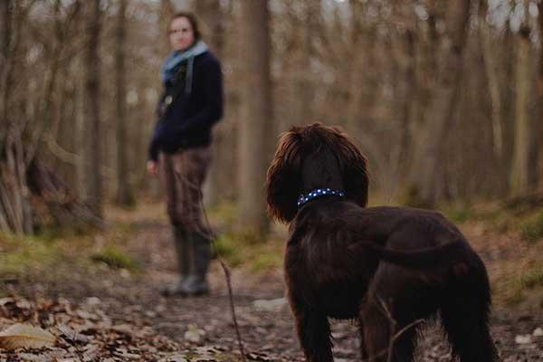 importance des promenades du chien