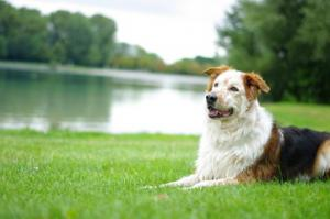 troubles-gastriques-chien