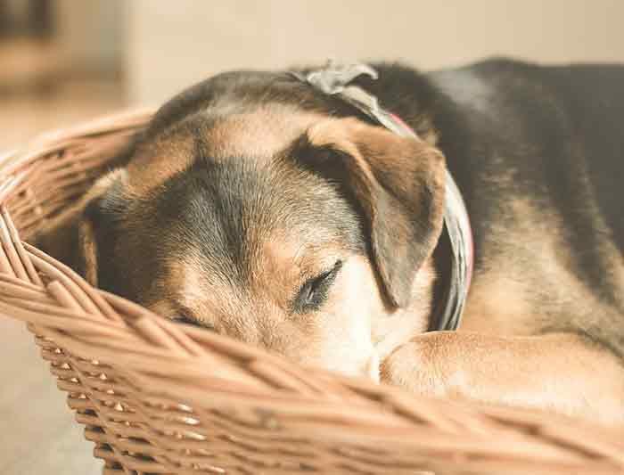 Apprendre à son chien l'indication au panier ou à ta place