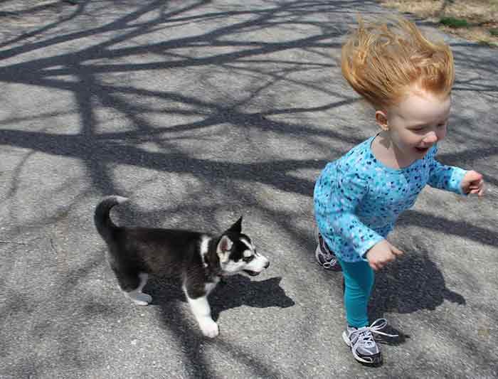 avoir peur des chiens