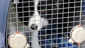 La caisse de transport pour chien