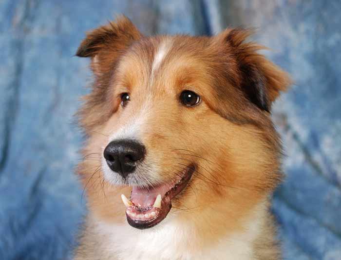 éducation positive du chien