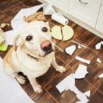Mon chien est excité sexuellement : comment le calmer