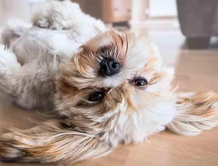 Apprendre des tours à son chien : règles et techniques