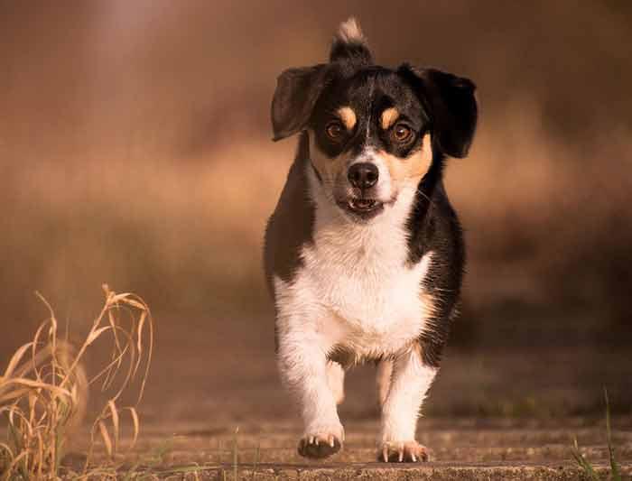 Mon chien a peur des autres chiens : causes et solutions