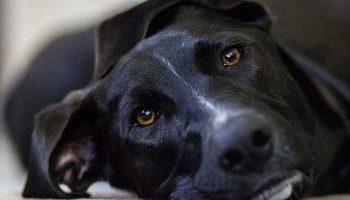 aider un chien à faire son deuil