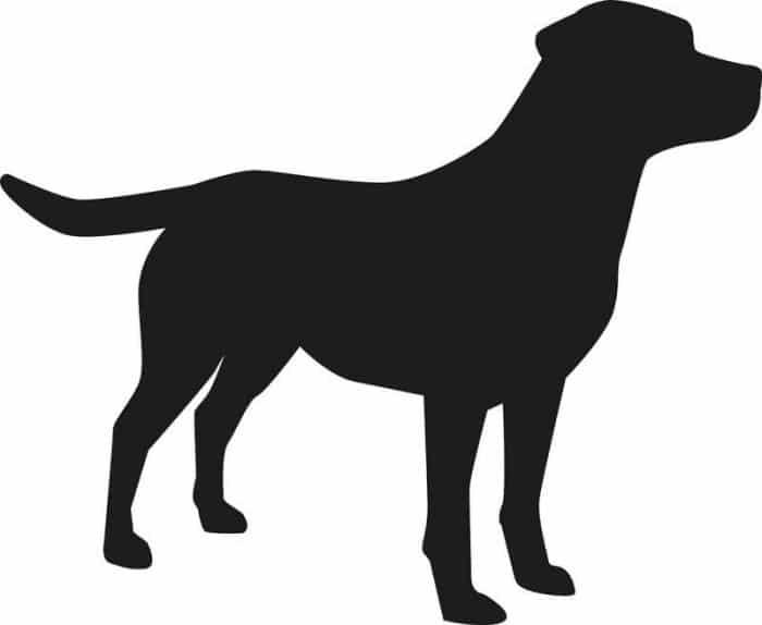 Toulouse : un labrador mord 3 personnes avant d'être abattu