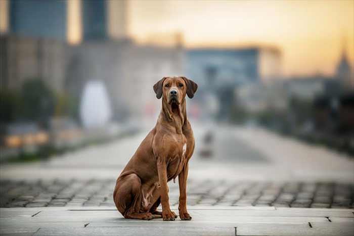 Vivre en ville avec son chien