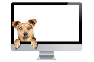 Le chien, nouvelle star du web?