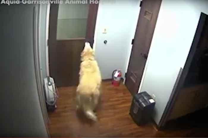 Le chien General ouvre les portes pour s'évader