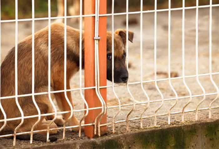 Il est interdit de comsommer du chien à Taïwan