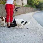 L'ADN des chiens utilisé pour identifier les propriétaires qui ne ramassent pas leurs crottes