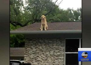 Huck le chien sur le toit
