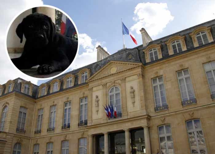 Philae, chien de François Hollande