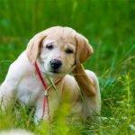 La gale du chien for Exterieur oreille qui gratte