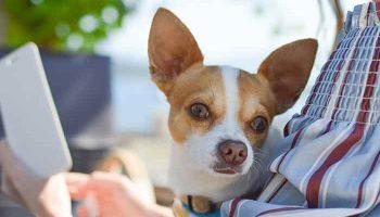 thérapie de détachement du chien