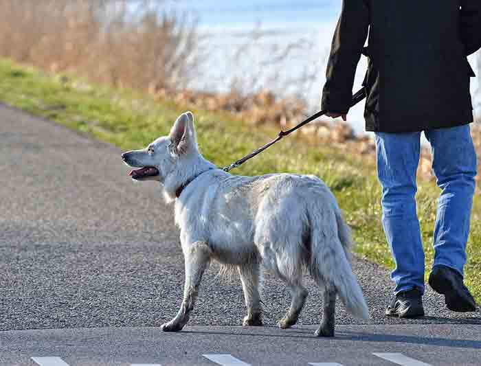 Mon chien ne m'écoute plus en promenade
