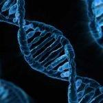 ADN du chien