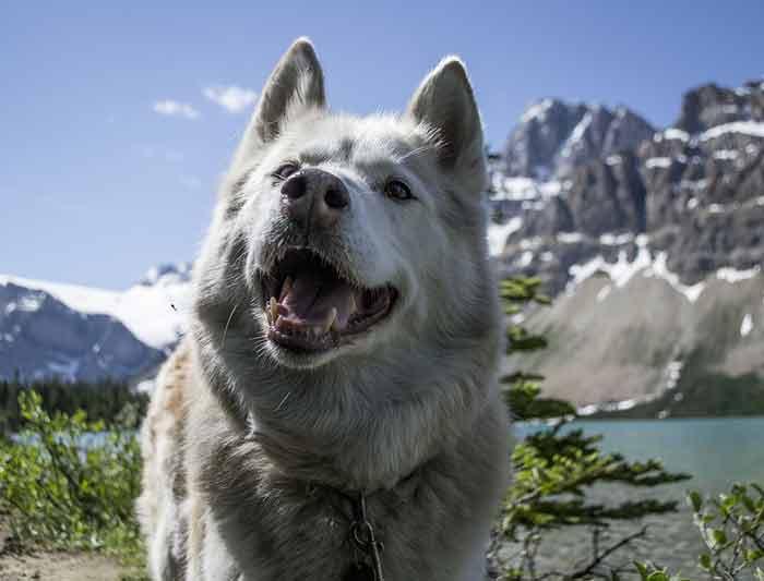 assurance animaux voyage à l'étranger
