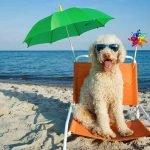 Plages autorisées aux chiens en 2017