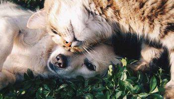 franchise de l'assurance animaux