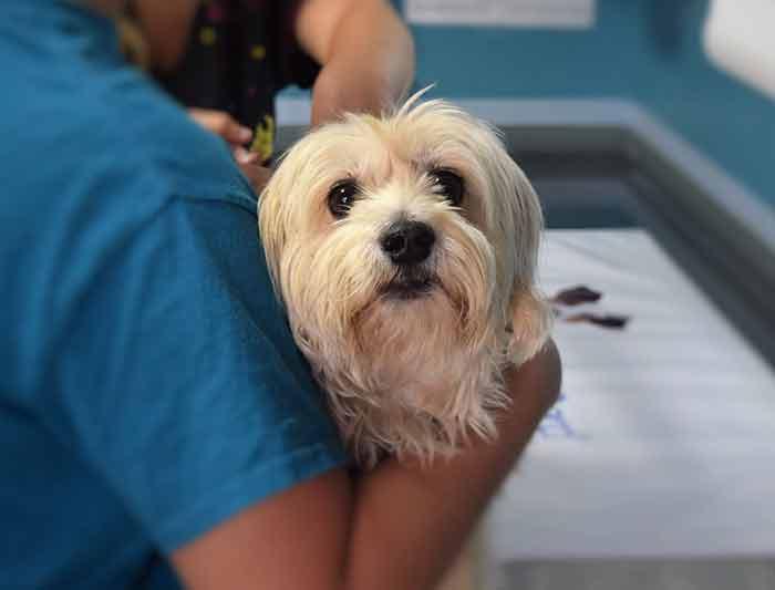 le prix des soins vétérinaires