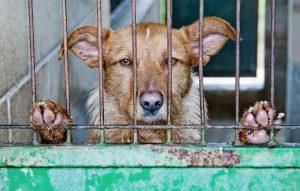 vague d'abandons de chien en été