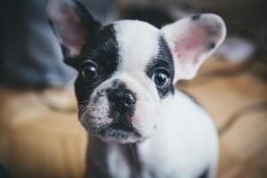 assurance chien sans franchise