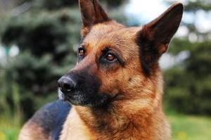 remboursement frais veterinaire assurance chien