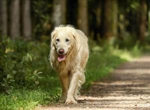 assurance chien de plus de 10 ans