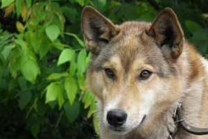 assurance chien de plus de 5 ans
