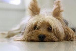 choisir assurance santé pour chien