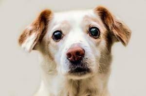 que couvre une assurance chien