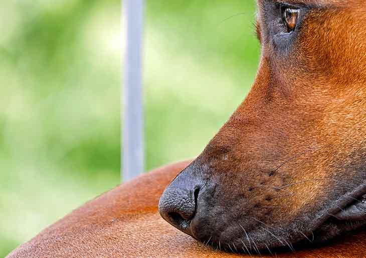 Un chien qui souffre